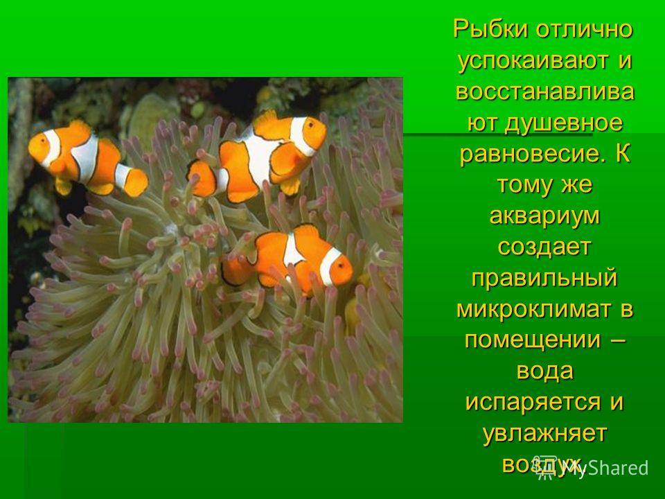 Рыбки отлично успокаивают и восстанавлива ют душевное равновесие. К тому же аквариум создает правильный микроклимат в помещении – вода испаряется и увлажняет воздух. Рыбки отлично успокаивают и восстанавлива ют душевное равновесие. К тому же аквариум