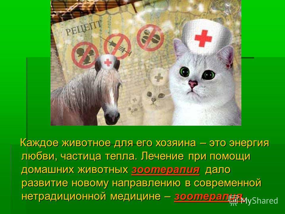 Каждое животное для его хозяина – это энергия любви, частица тепла. Лечение при помощи домашних животных зоотерапия дало развитие новому направлению в современной нетрадиционной медицине – зоотерапия. Каждое животное для его хозяина – это энергия люб