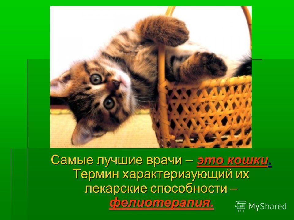 Самые лучшие врачи – это кошки. Термин характеризующий их лекарские способности – фелиотерапия. Самые лучшие врачи – это кошки. Термин характеризующий их лекарские способности – фелиотерапия.