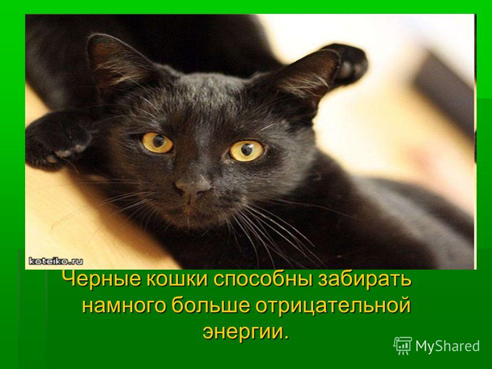 Черные кошки способны забирать намного больше отрицательной энергии.