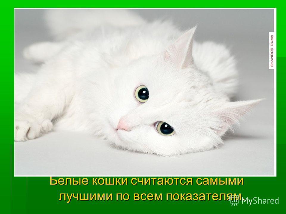 Белые кошки считаются самыми лучшими по всем показателям.