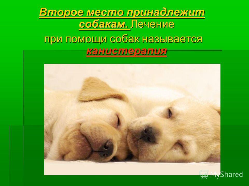 Второе место принадлежит собакам. Лечение при помощи собак называется канистерапия при помощи собак называется канистерапия