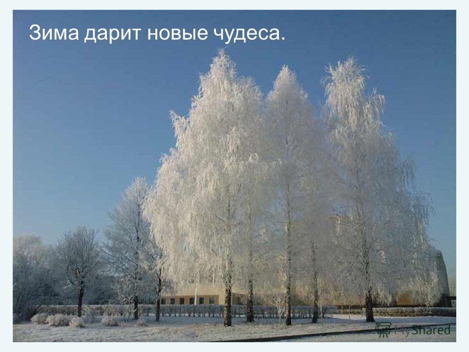 Зима дарит новые чудеса.