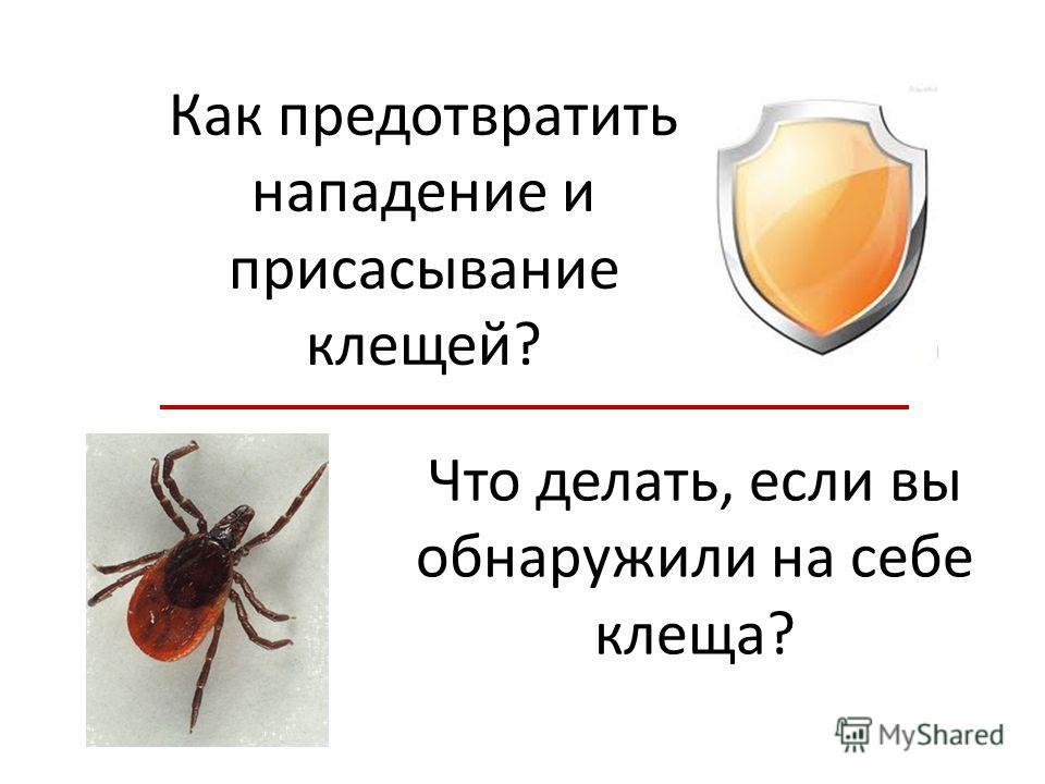 Как предотвратить нападение и присасывание клещей? Что делать, если вы обнаружили на себе клеща?