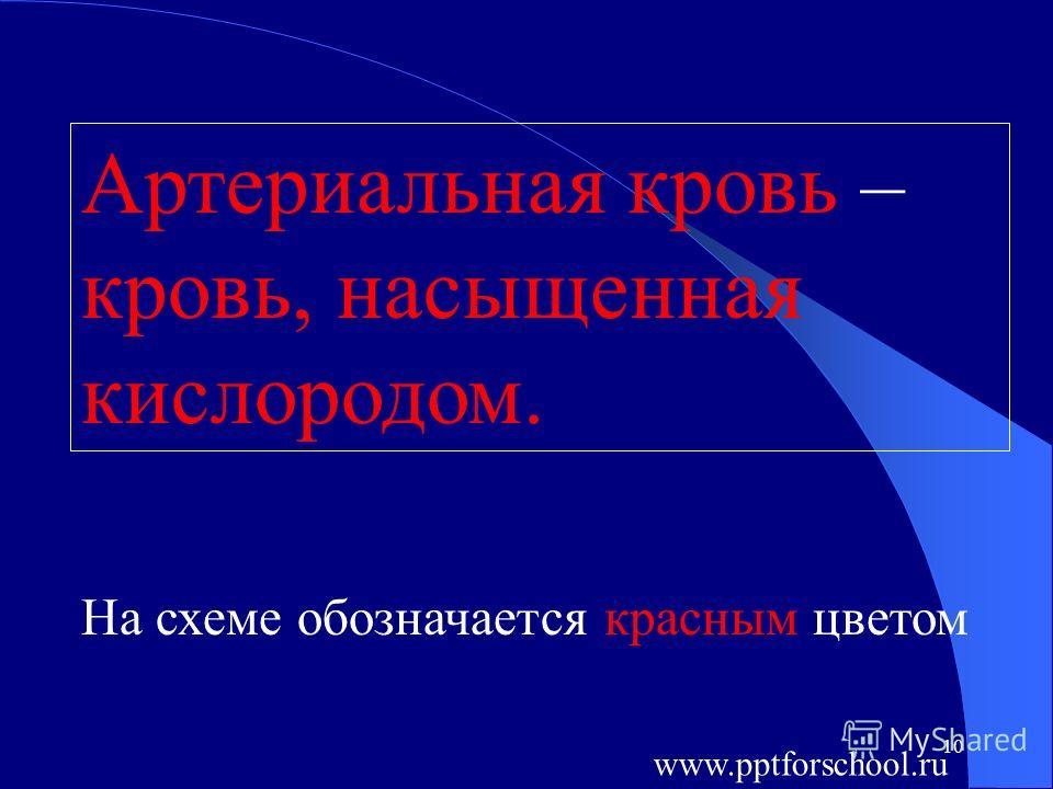 10 Артериальная кровь – кровь, насыщенная кислородом. На схеме обозначается красным цветом www.pptforschool.ru
