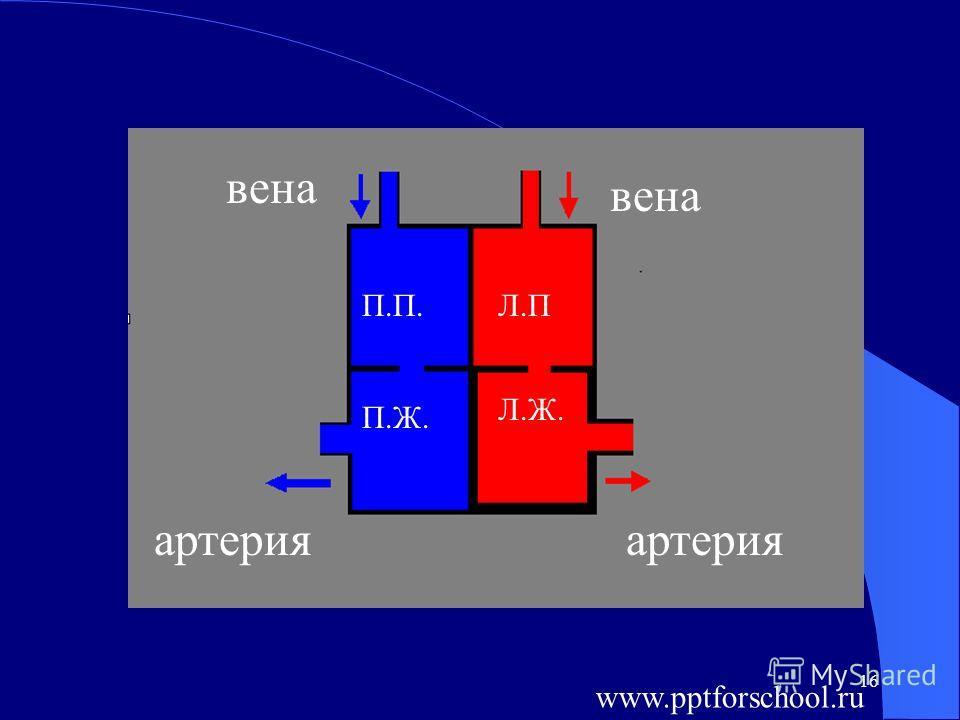 16 П.П. П.Ж. Л.П Л.Ж. вена вена артерияартерия www.pptforschool.ru