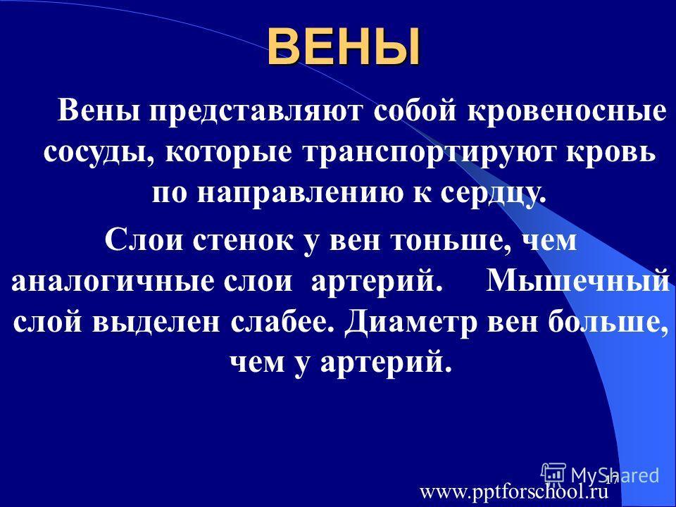 17ВЕНЫ Вены представляют собой кровеносные сосуды, которые транспортируют кровь по направлению к сердцу. Слои стенок у вен тоньше, чем аналогичные слои артерий. Мышечный слой выделен слабее. Диаметр вен больше, чем у артерий. www.pptforschool.ru