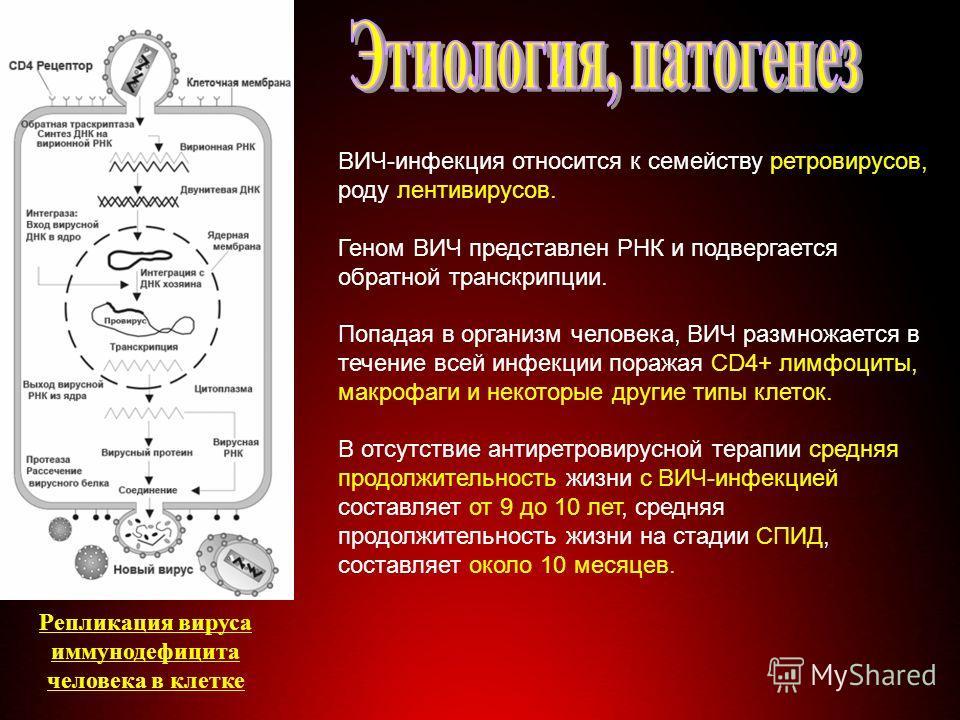 Строение вируса ВИЧ-инфекция относится к семейству ретровирусов, роду лентивирусов. Геном ВИЧ представлен РНК и подвергается обратной транскрипции. Попадая в организм человека, ВИЧ размножается в течение всей инфекции поражая CD4+ лимфоциты, макрофаг