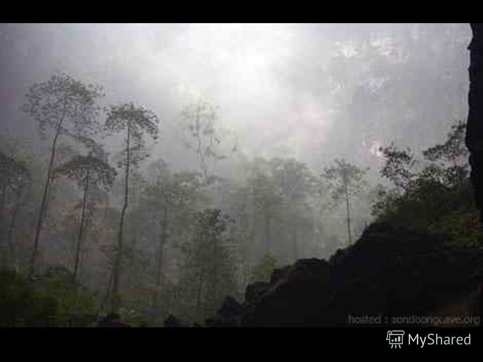 Hang Son Doong поражает своей немыслимой красотой и уникальной экосистемой. Внутри находятся удивительные сталактиты, сталагмиты и настоящий тропический лес и… облака! Ведь света сквозь «окошки» в потолке проникает вполне достаточно для жизни растени