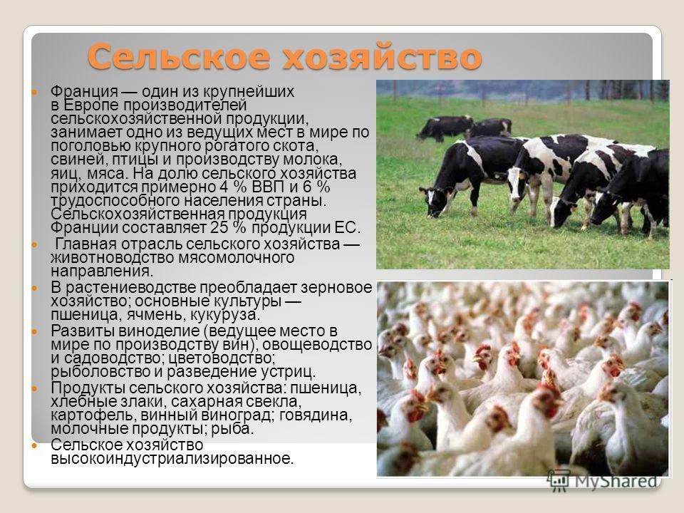Сельское хозяйство Франция один из крупнейших в Европе производителей сельскохозяйственной продукции, занимает одно из ведущих мест в мире по поголовью крупного рогатого скота, свиней, птицы и производству молока, яиц, мяса. На долю сельского хозяйст