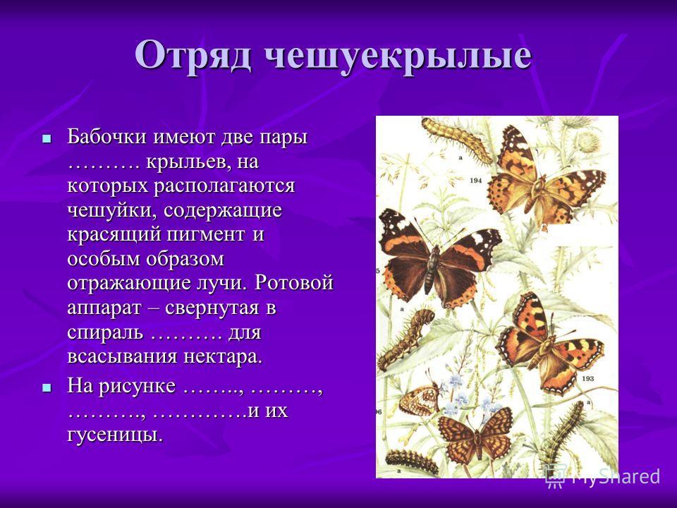 Отряд чешуекрылые Бабочки имеют две пары ………. крыльев, на которых располагаются чешуйки, содержащие красящий пигмент и особым образом отражающие лучи. Ротовой аппарат – свернутая в спираль ………. для всасывания нектара. Бабочки имеют две пары ………. крыл
