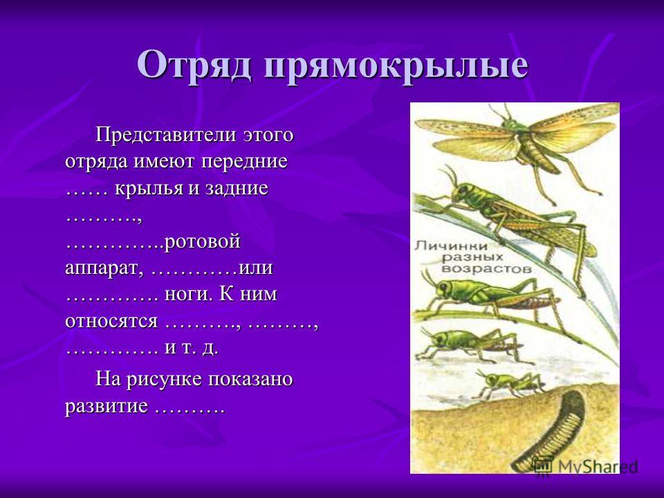 Отряд прямокрылые Представители этого отряда имеют передние …… крылья и задние ………., …………..ротовой аппарат, …………или …………. ноги. К ним относятся ………., ………, …………. и т. д. Представители этого отряда имеют передние …… крылья и задние ………., …………..ротовой