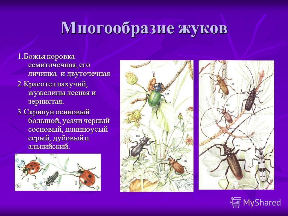 Многообразие жуков 1.Божья коровка семиточечная, его личинка и двуточечная 2.Красотел пахучий, жужелицы лесная и зернистая. 3.Скрипун осиновый большой, усачи черный сосновый, длинноусый серый, дубовый и альпийский.