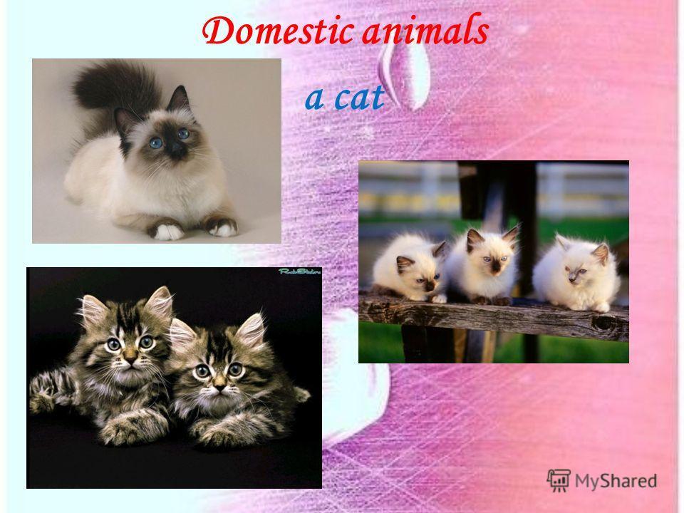 Domestic animals a cat
