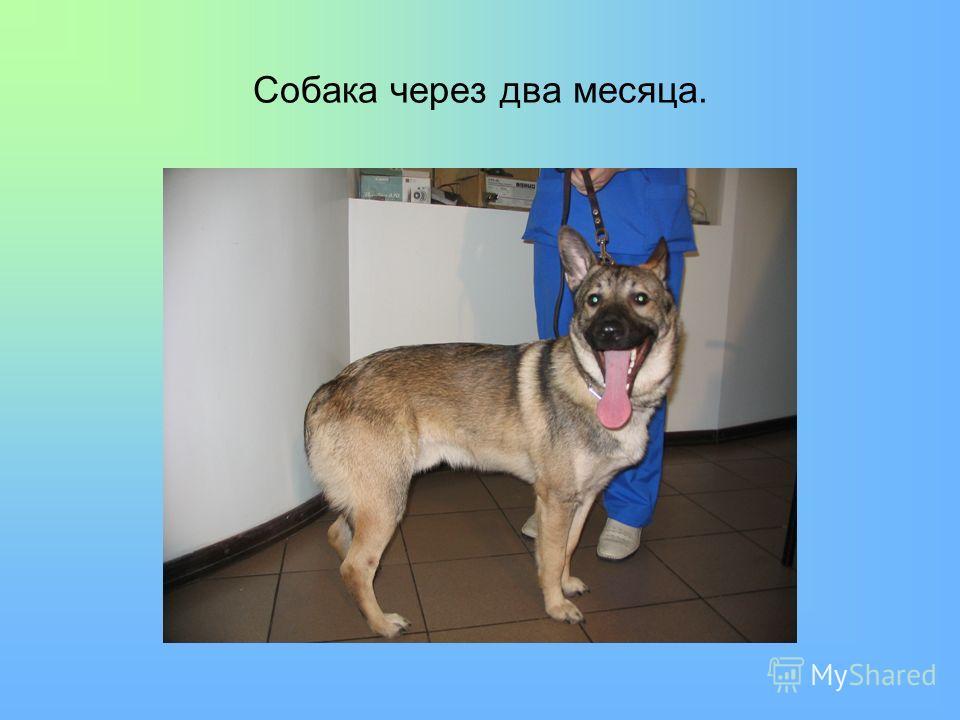Собака через два месяца.