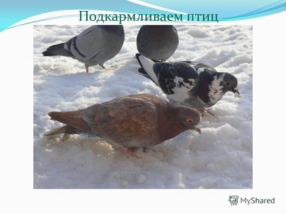 Подкармливаем птиц