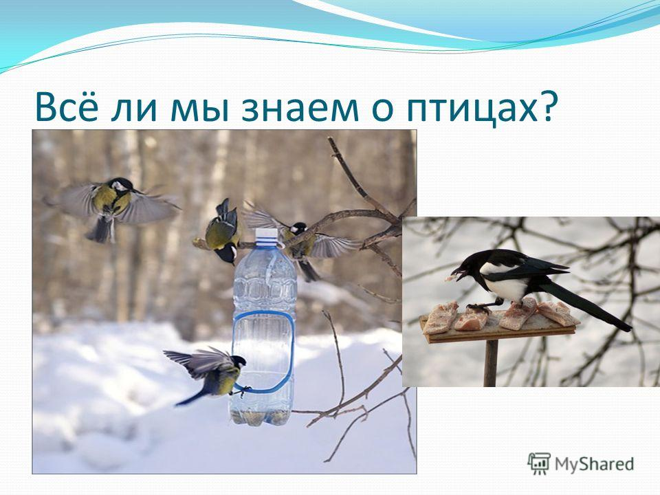 Всё ли мы знаем о птицах?