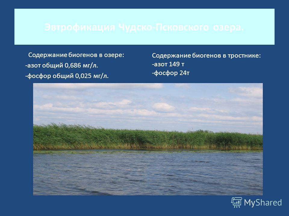 Эвтрофикация Чудско-Псковского озера. Содержание биогенов в озере: -азот общий 0,686 мг/л. -фосфор общий 0,025 мг/л. Содержание биогенов в тростнике: -азот 149 т -фосфор 24т
