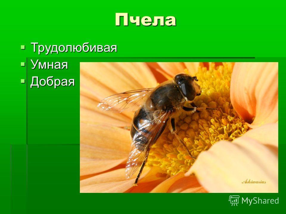 Пчела Трудолюбивая Трудолюбивая Умная Умная Добрая Добрая
