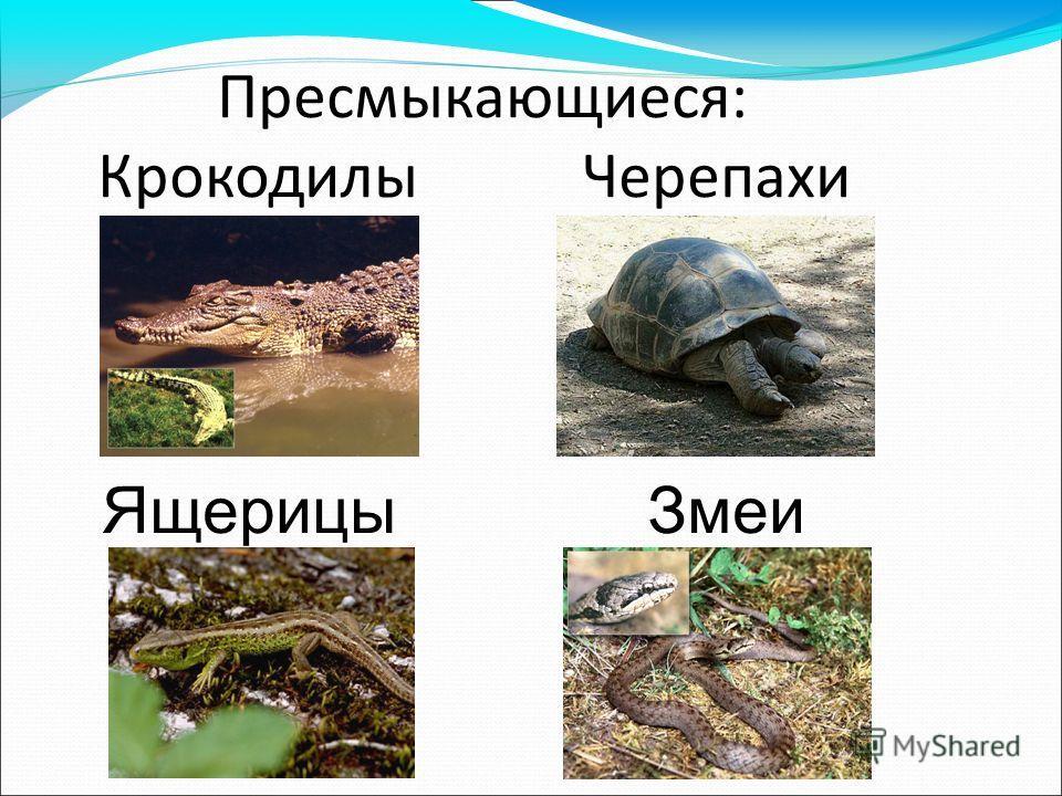 Пресмыкающиеся: Крокодилы Черепахи Ящерицы Змеи