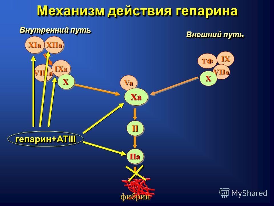 Внешний путь Внутренний путь IX ТФ VIIa VIIIaVIIIa IXaIXa XIaXIa ХХ XIIaXIIa VaVa Х IIaIIa фибрин IIII ХaХaХaХa ХaХaХaХa гепарин+АТIII Механизм действия гепарина