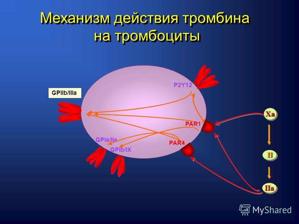 GPIa/IIa GPIb/IХ P2Y12 GPIIb/IIIa PAR1 PAR4 IIaIIa IIII ХaХaХaХa ХaХaХaХa Механизм действия тромбина на тромбоциты