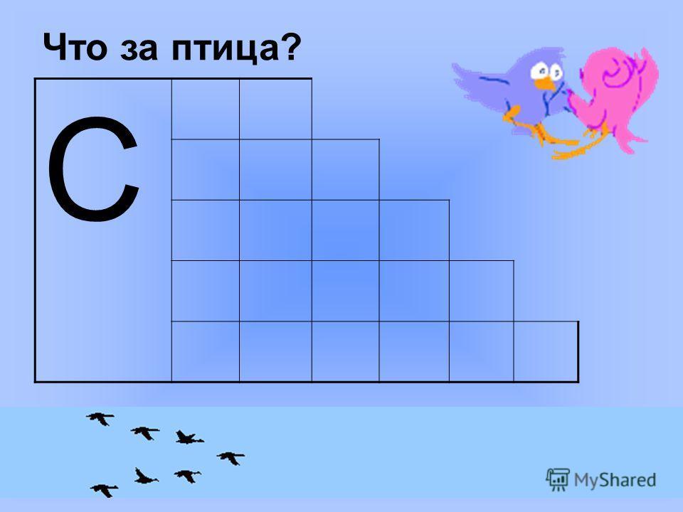 Что за птица? С