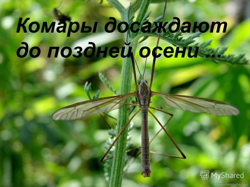 Комары досаждают до поздней осени...