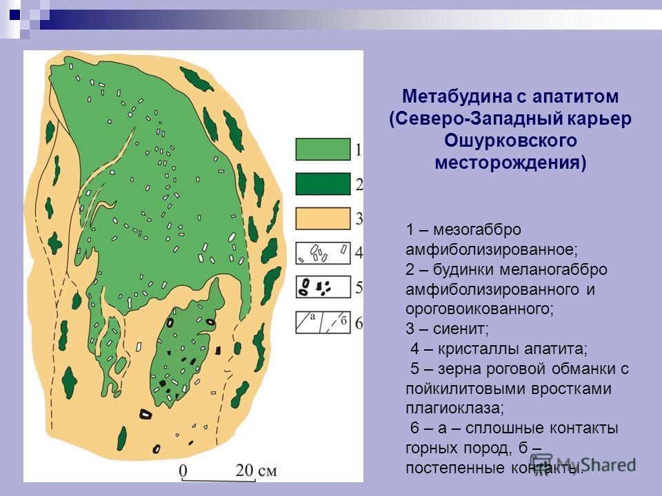 1 – мезогаббро амфиболизированное; 2 – будинки меланогаббро амфиболизированного и ороговоикованного; 3 – сиенит; 4 – кристаллы апатита; 5 – зерна роговой обманки с пойкилитовыми вростками плагиоклаза; 6 – а – сплошные контакты горных пород, б – посте