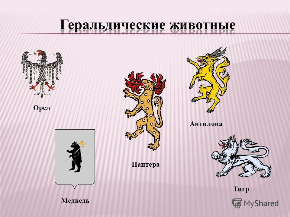 Орел Медведь Пантера Антилопа Тигр