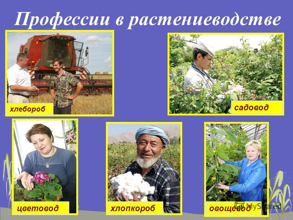 Профессии в растениеводстве хлебороб садовод цветоводхлопкоробовощевод