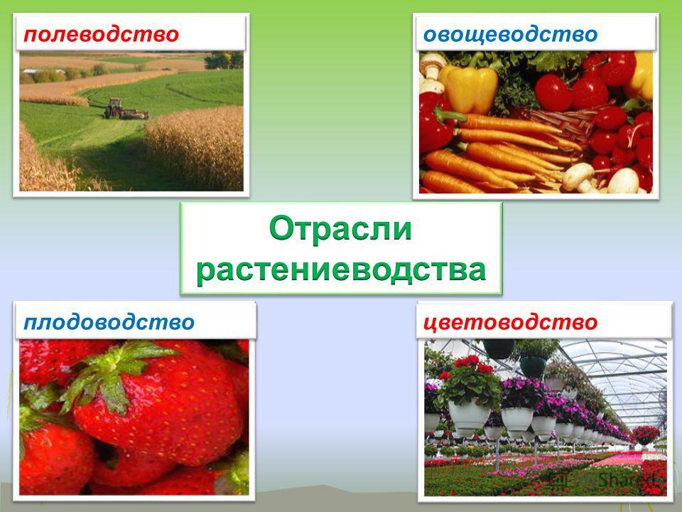 плодоводство цветоводство полеводство овощеводство