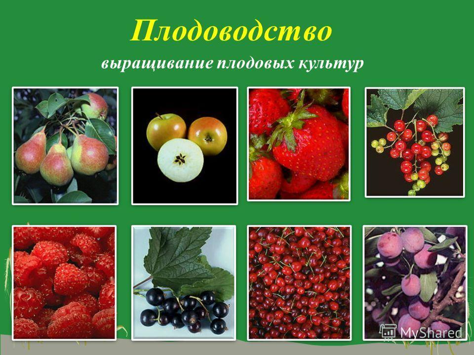 Плодоводство выращивание плодовых культур