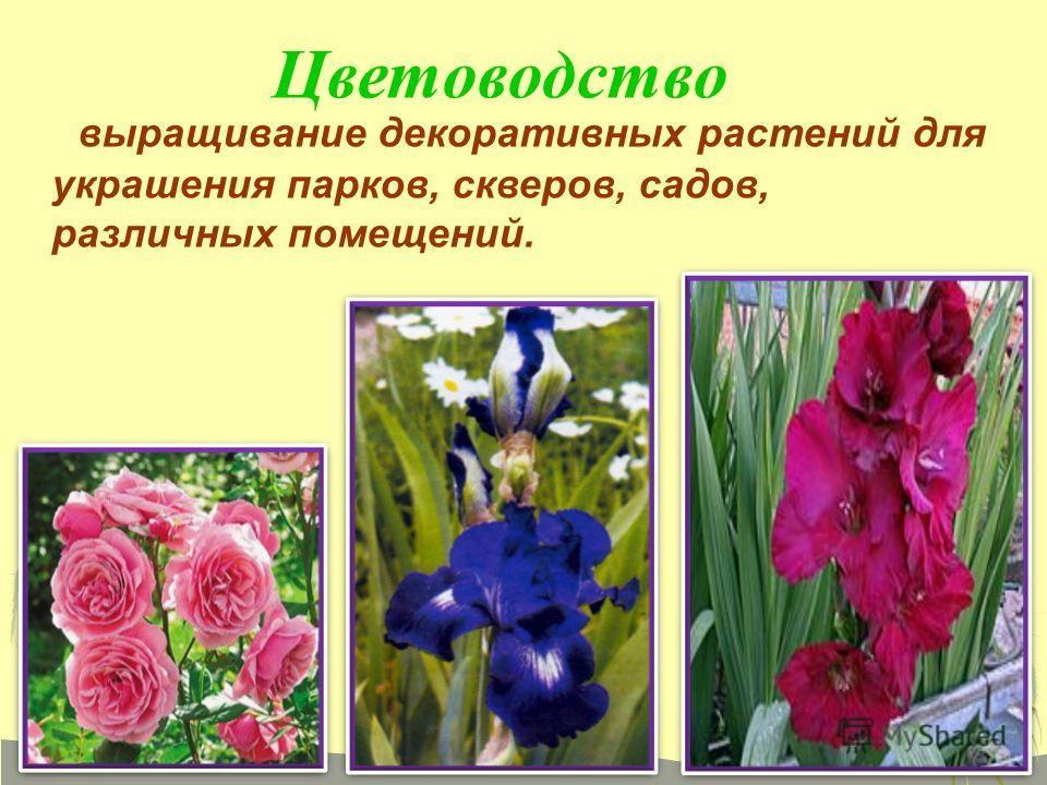 выращивание декоративных растений для украшения парков, скверов, садов, различных помещений. Цветоводство