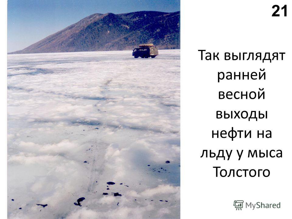 Так выглядят ранней весной выходы нефти на льду у мыса Толстого 21