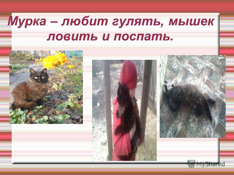 Мурка – любит гулять, мышек ловить и поспать.