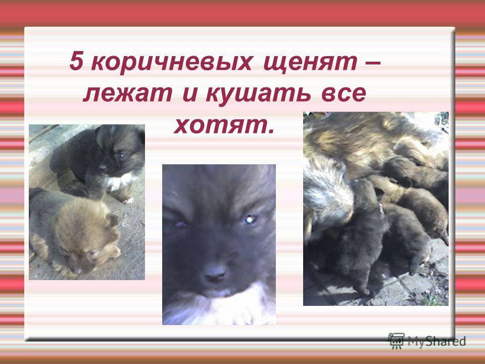5 коричневых щенят – лежат и кушать все хотят.