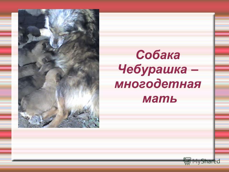 Собака Чебурашка – многодетная мать