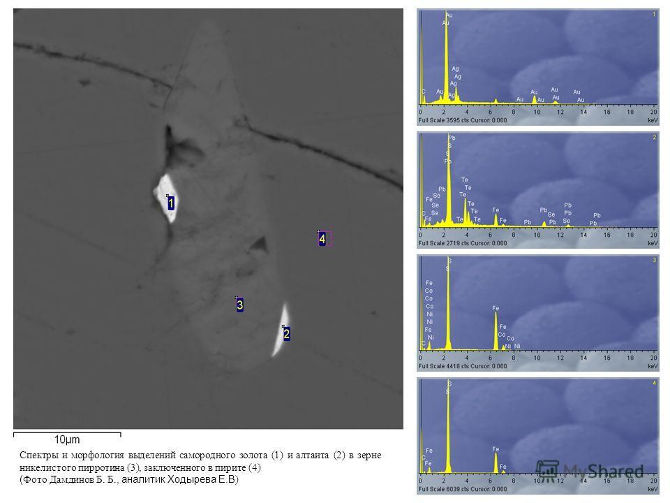 Спектры и морфология выделений самородного золота (1) и алтаита (2) в зерне никелистого пирротина (3), заключенного в пирите (4) ( Фото Дамдинов Б. Б., аналитик Ходырева Е.В )