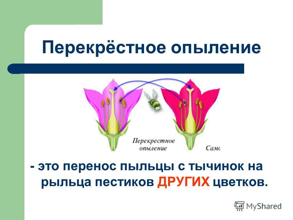 Перекрёстное опыление - это перенос пыльцы с тычинок на рыльца пестиков ДРУГИХ цветков.