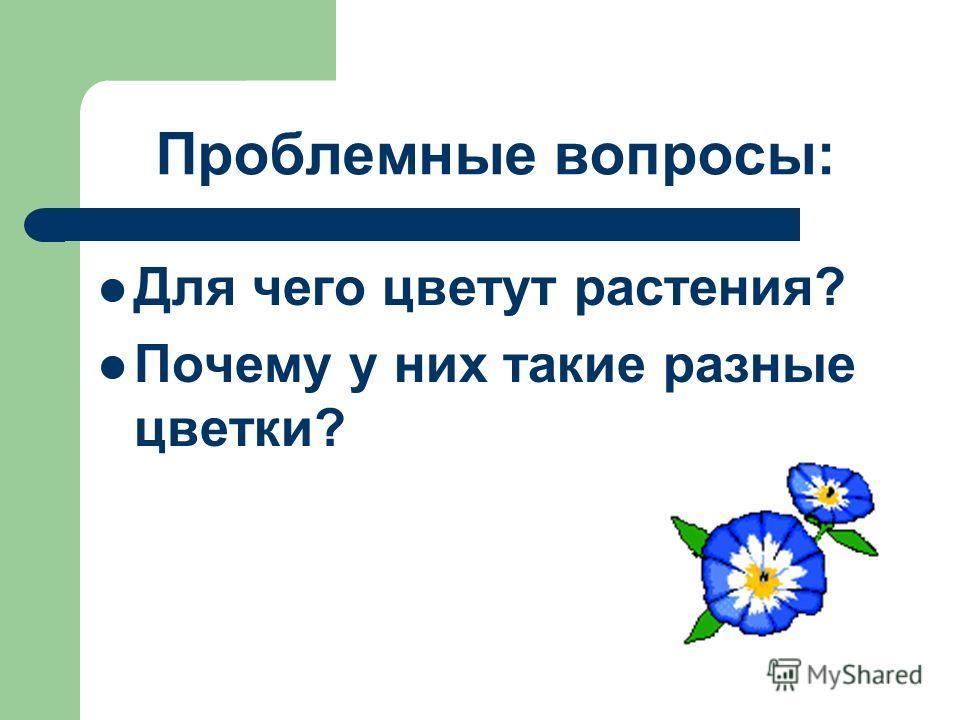 Проблемные вопросы: Для чего цветут растения? Почему у них такие разные цветки?