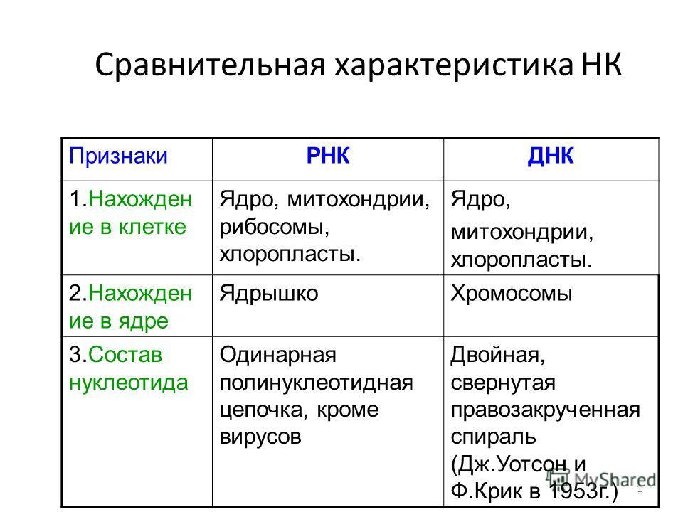 1 Сравнительная характеристика НК ПризнакиРНКДНК 1.Нахожден ие в клетке Ядро, митохондрии, рибосомы, хлоропласты. Ядро, митохондрии, хлоропласты. 2.Нахожден ие в ядре ЯдрышкоХромосомы 3.Состав нуклеотида Одинарная полинуклеотидная цепочка, кроме виру