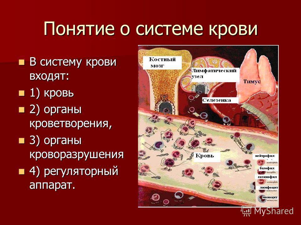 Понятие о системе крови В систему крови входят: В систему крови входят: 1) кровь 1) кровь 2) органы кроветворения, 2) органы кроветворения, 3) органы кроворазрушения 3) органы кроворазрушения 4) регуляторный аппарат. 4) регуляторный аппарат.