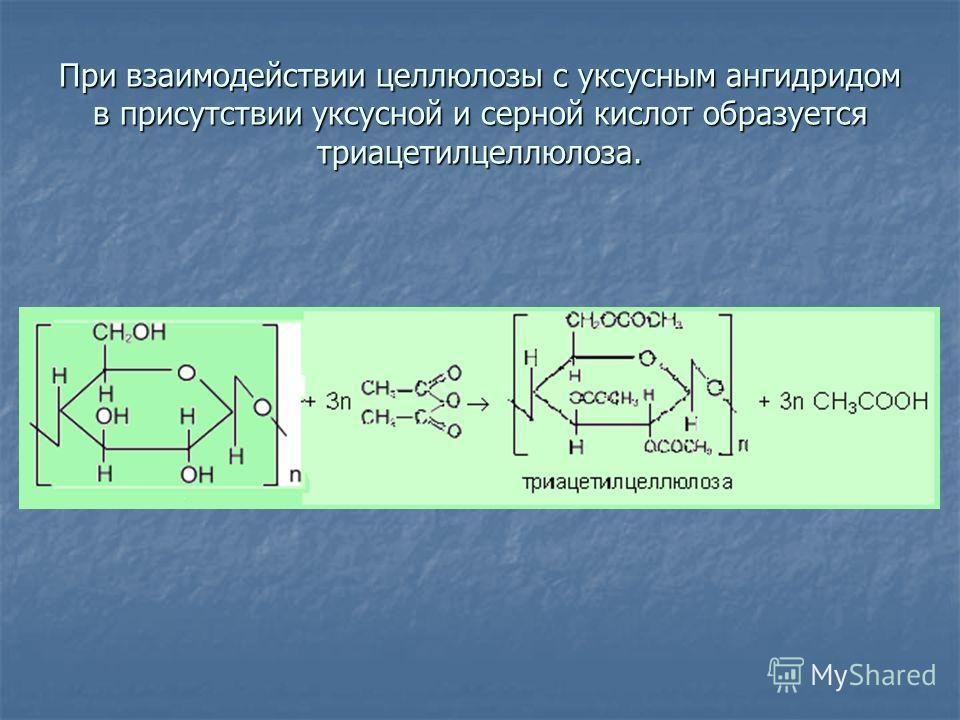 При взаимодействии целлюлозы с уксусным ангидридом в присутствии уксусной и серной кислот образуется триацетилцеллюлоза.