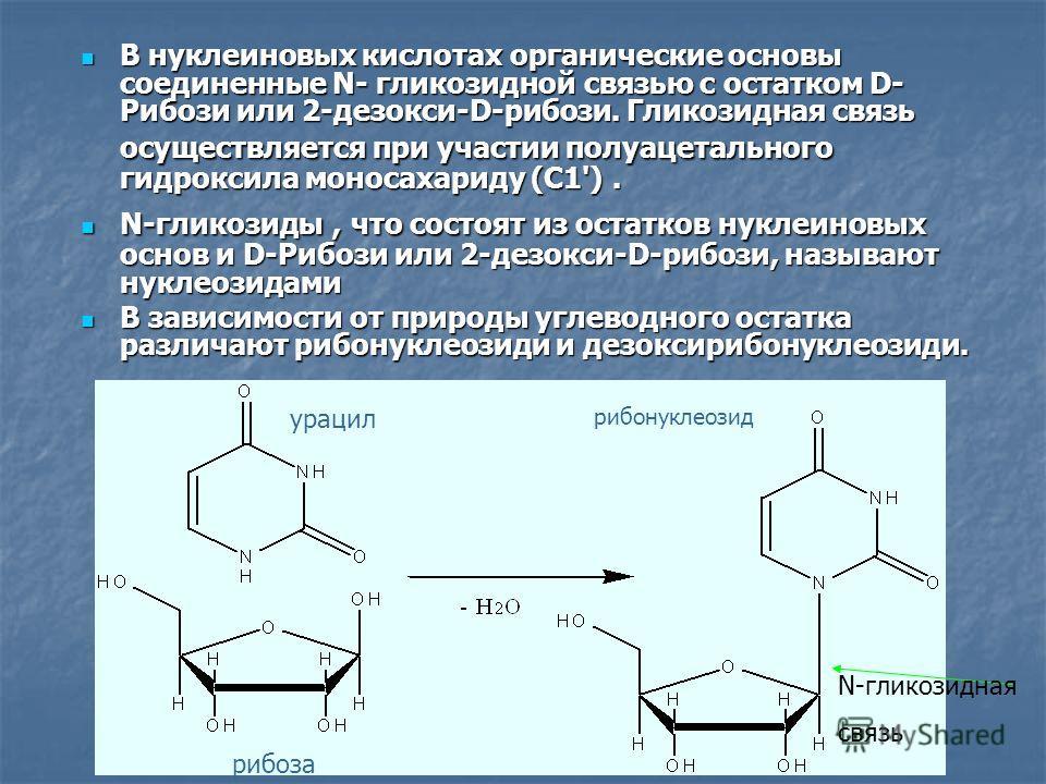 рибонуклеозид урацил рибоза В нуклеиновых кислотах органические основы соединенные N- гликозидной связью с остатком D- Рибози или 2-дезокси-D-рибози. Гликозидная связь осуществляется при участии полуацетального гидроксила моносахариду (С1'). В нуклеи