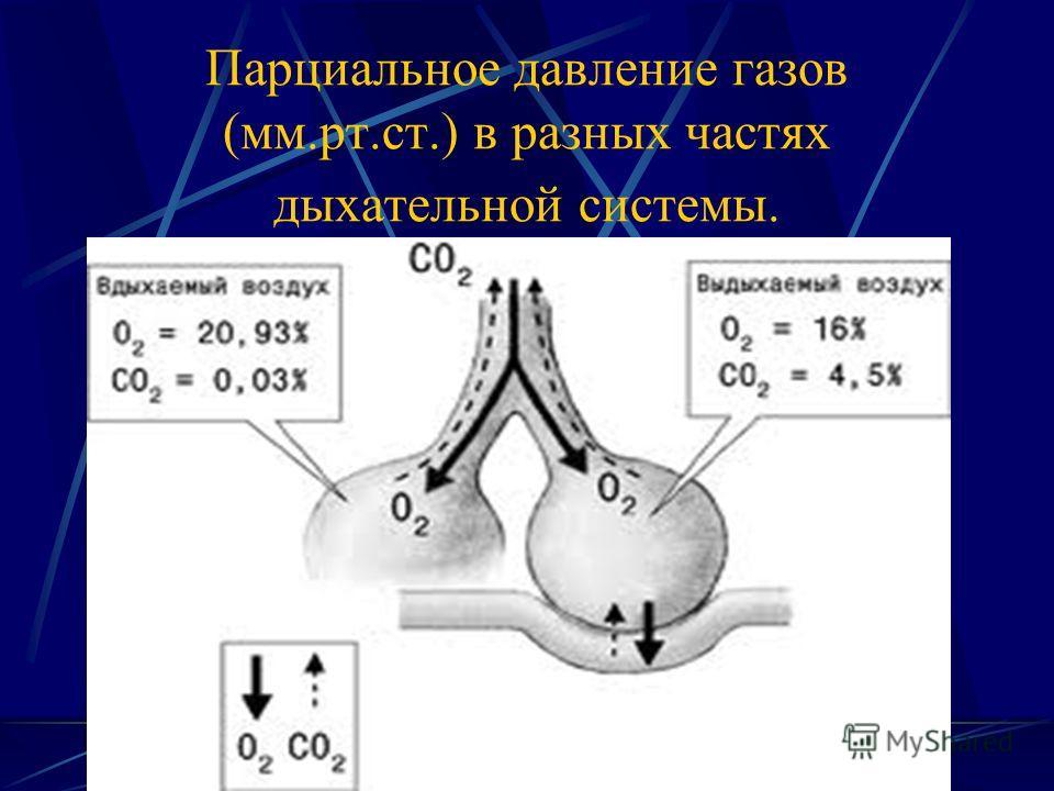 Парциальное давление газов (мм.рт.ст.) в разных частях дыхательной системы.