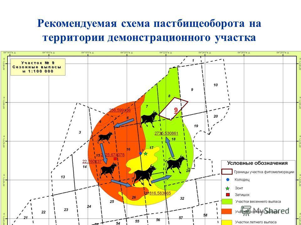 Рекомендуемая схема пастбищеоборота на территории демонстрационного участка