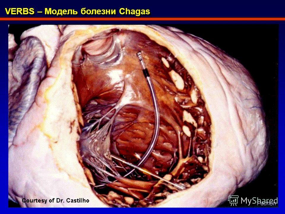 VERBS – Модель болезни Chagas