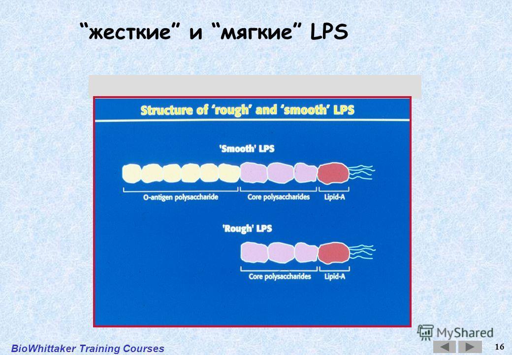 BioWhittaker Training Courses 16 жесткие и мягкие LPS