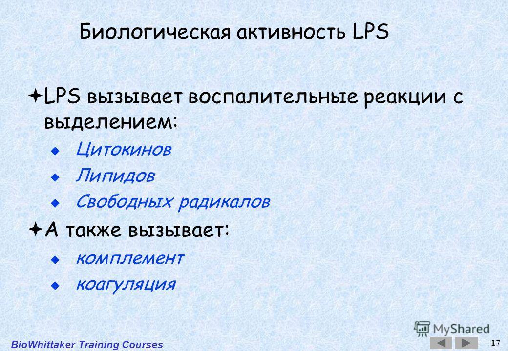 BioWhittaker Training Courses 17 Биологическая активность LPS LPS вызывает воспалительные реакции с выделением: Цитокинов Липидов Свободных радикалов А также вызывает: комплемент коагуляция